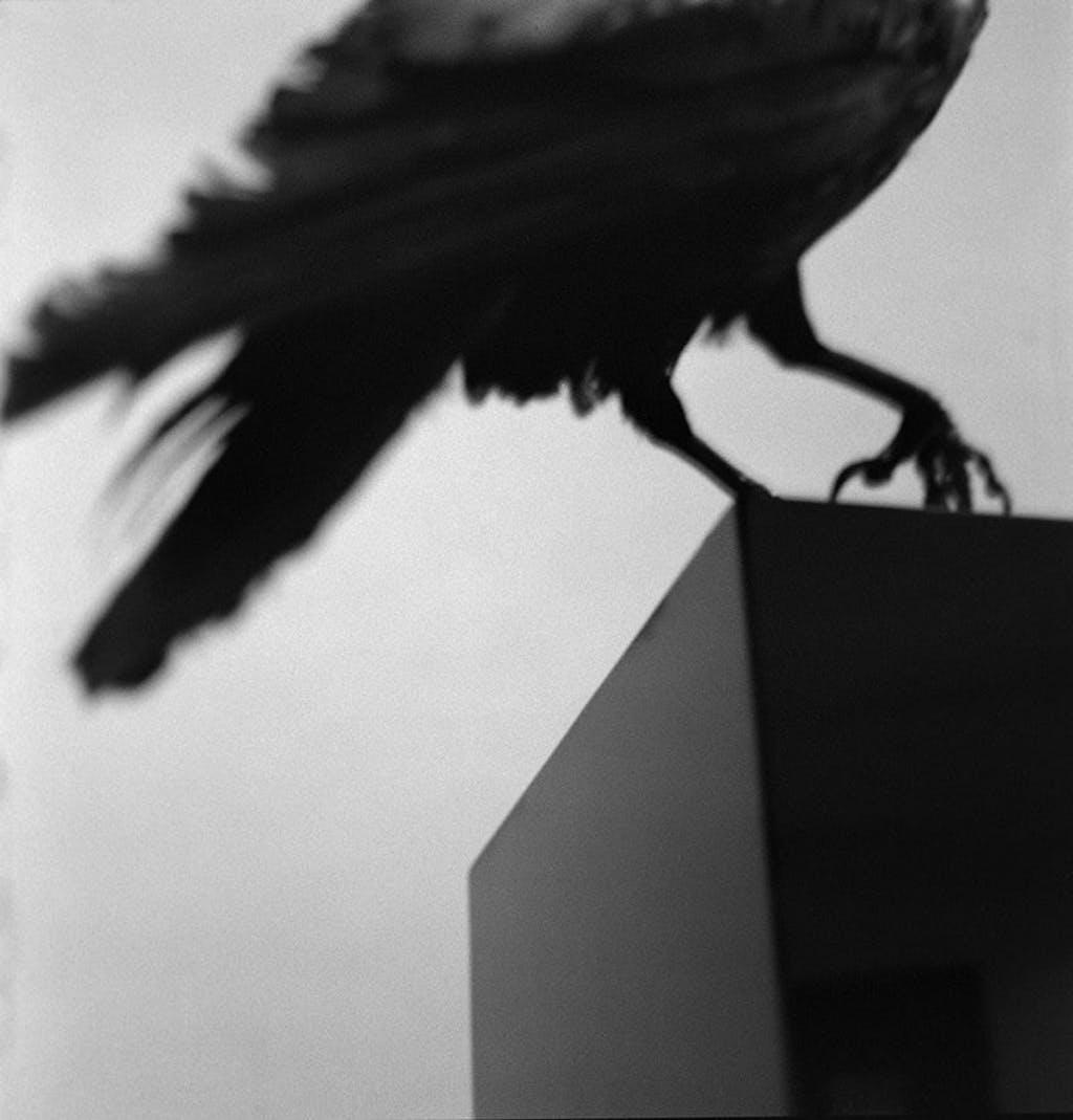 Monologo con un cuervo - © kamel mennour