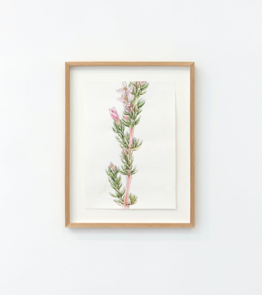 Frankenia Thymifolia - © kamel mennour